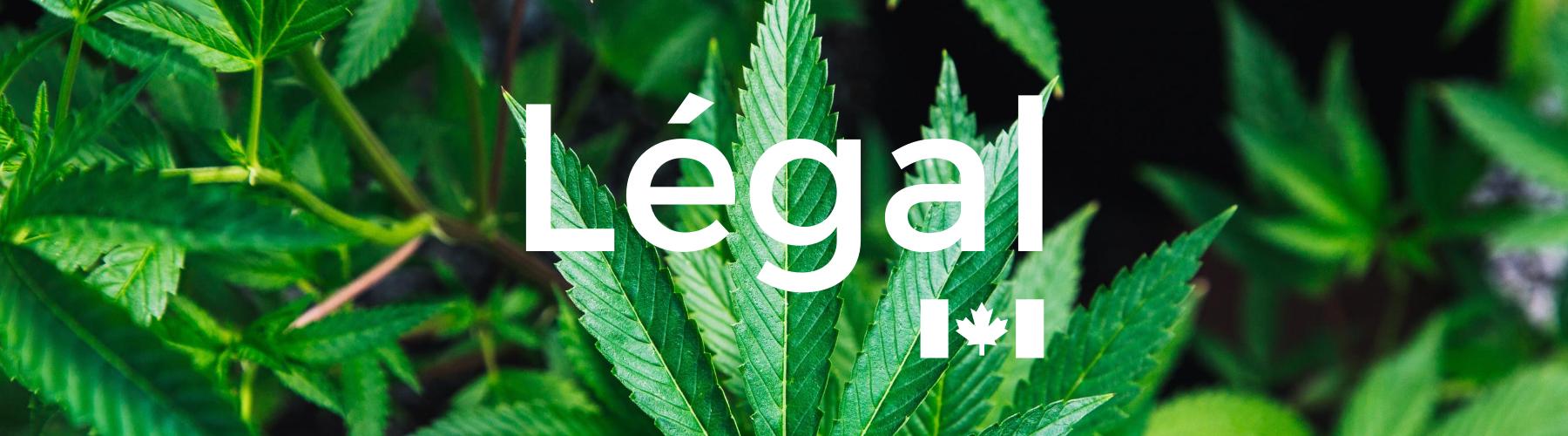 Cannabis 17 octobre